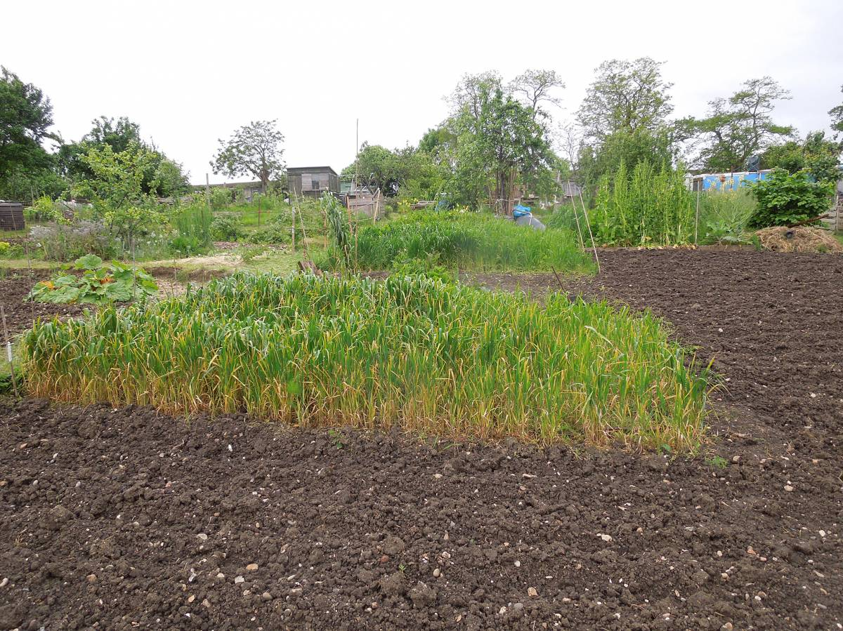 allotment review May #2 - 1:10pm&nbsp;10<sup>th</sup>&nbsp;May.&nbsp;'14