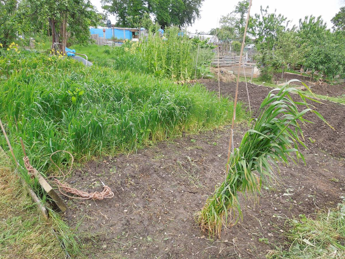 allotment review May #2 - Tsiteli Doli? - 1:10pm&nbsp;10<sup>th</sup>&nbsp;May.&nbsp;'14