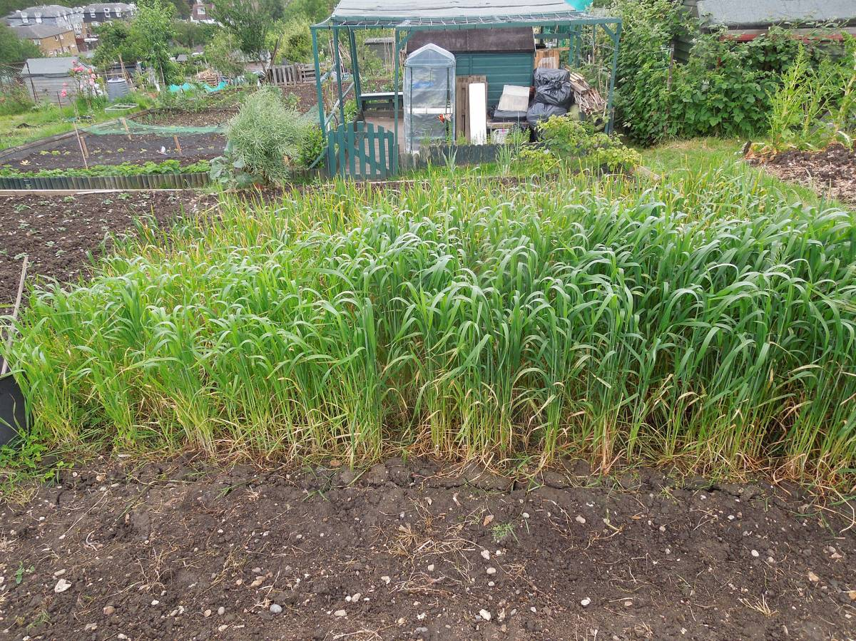 allotment review May #3 - 9:17am&nbsp;21<sup>st</sup>&nbsp;May.&nbsp;'14