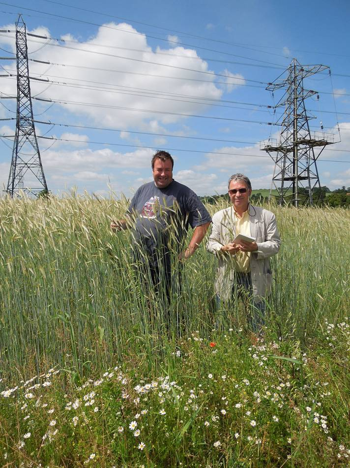 Brookers Farm - Caratop Rye, Luddesdown with farmers Stuart Roberts (Hammonds End and Brookers) and Paul Cragg (WoWo) - 10:48am&nbsp;16<sup>th</sup>&nbsp;Jun.&nbsp;'14