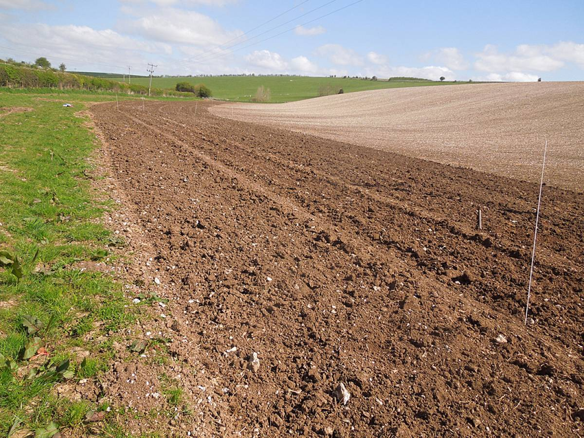 Spring heritage wheat sowing on Sheepdrove Organic Farm, Lambourn, Berkshire - 10:33am&nbsp;13<sup>th</sup>&nbsp;Apr.&nbsp;'14