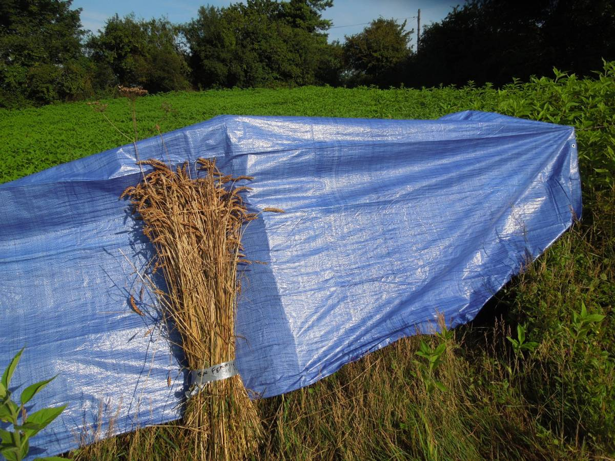 Perry Court biodynamic Farm harvest 2014 - Bon Fermier - 7:58am&nbsp;4<sup>th</sup>&nbsp;Aug.&nbsp;'14