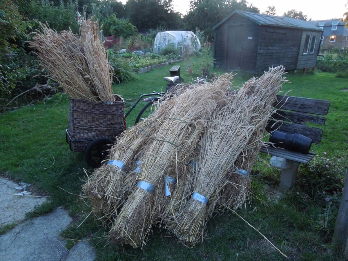 harvest home from allotments - 8:34pm&nbsp;17<sup>th</sup>&nbsp;Aug.&nbsp;'14