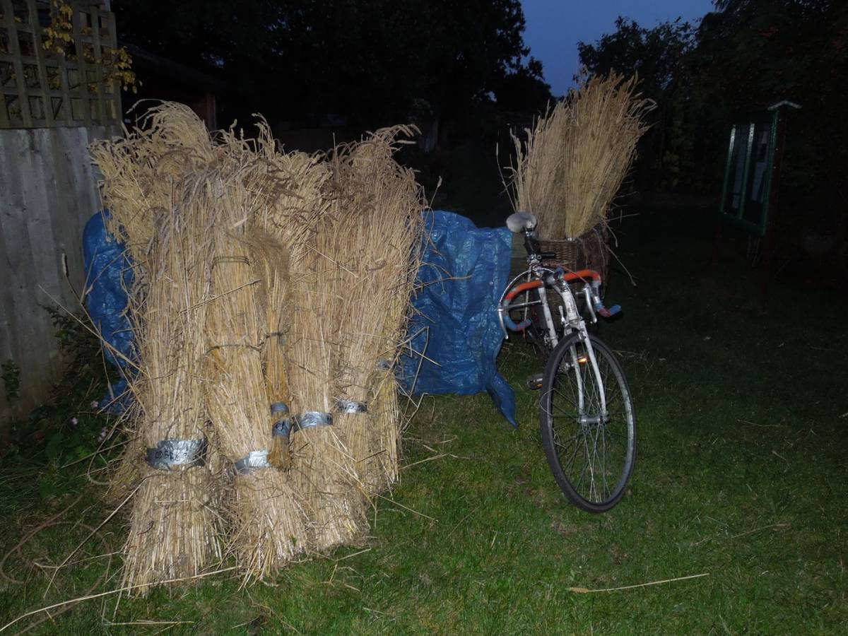 harvest home from allotments - 8:39pm&nbsp;17<sup>th</sup>&nbsp;Aug.&nbsp;'14