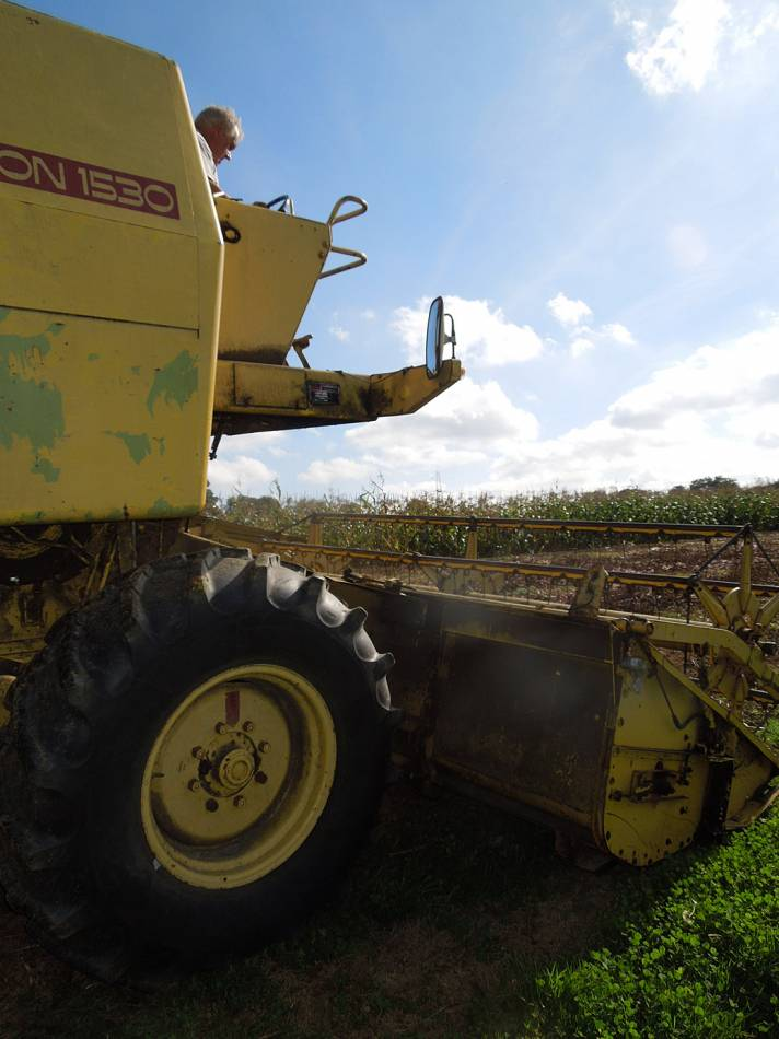buckwheat harvest with Tim and his combine on WoWo 2014 - 2:45pm&nbsp;3<sup>rd</sup>&nbsp;Oct.&nbsp;'14