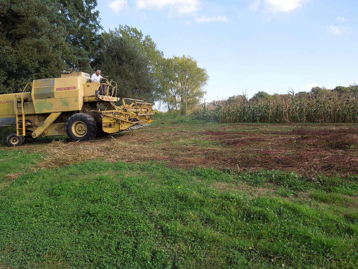 buckwheat harvest with Tim and his combine on WoWo 2014 - 2:44pm&nbsp;3<sup>rd</sup>&nbsp;Oct.&nbsp;'14
