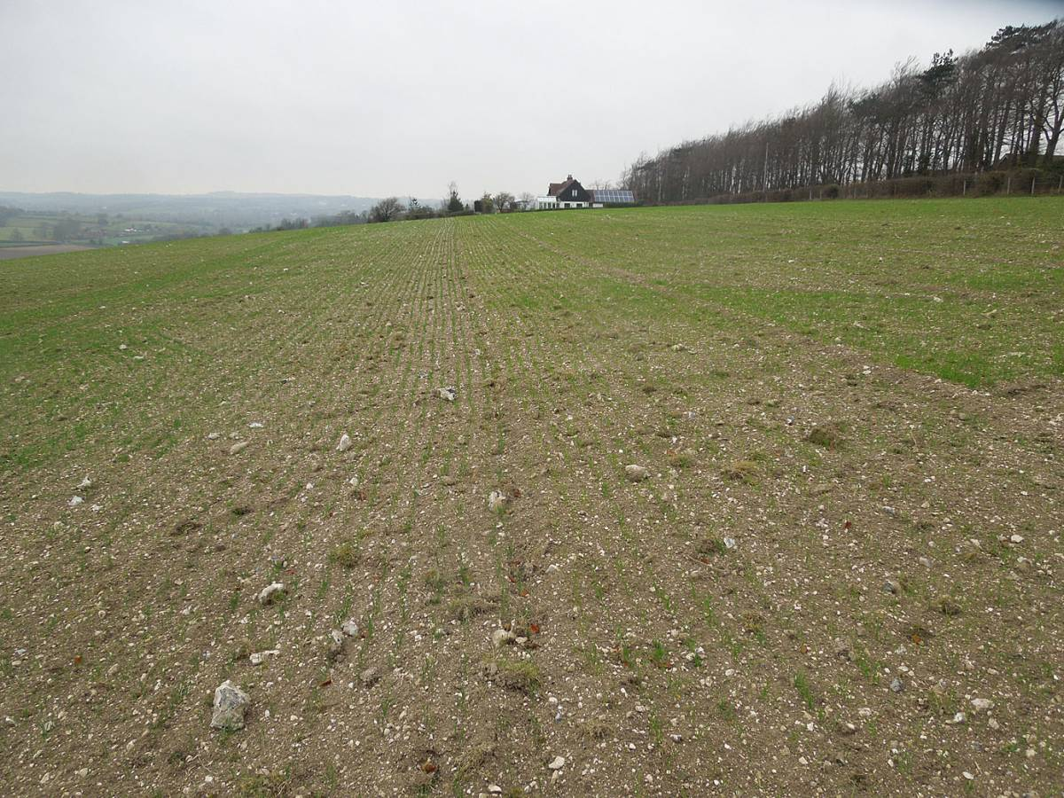 Perry Court sowings - 11:17am&nbsp;3<sup>rd</sup>&nbsp;Dec.&nbsp;'13