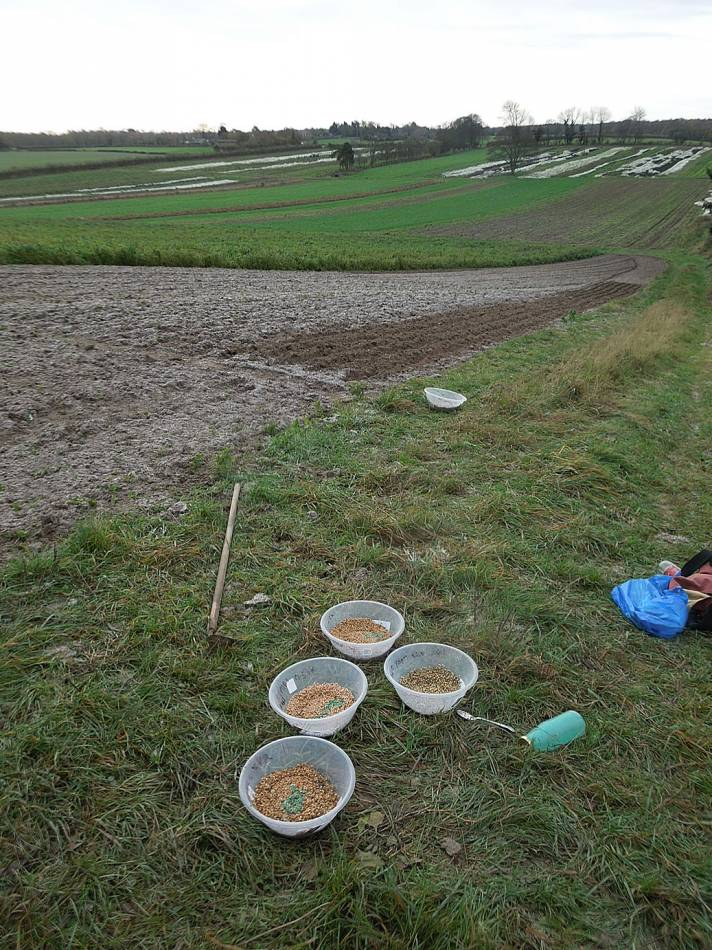 Perry Court sowings - 9:18am&nbsp;4<sup>th</sup>&nbsp;Dec.&nbsp;'13