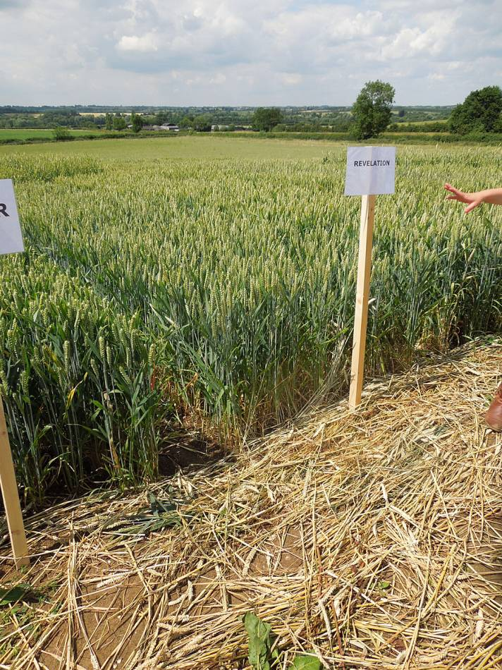 National Organic Cereals 2014 meet - 11:46am&nbsp;30<sup>th</sup>&nbsp;Jun.&nbsp;'14