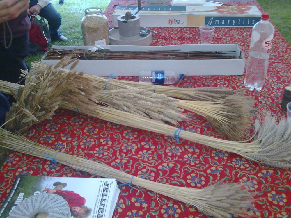 show and tell for John Letts' multi old variety wheat planting experiments + box of medieval thatch straw