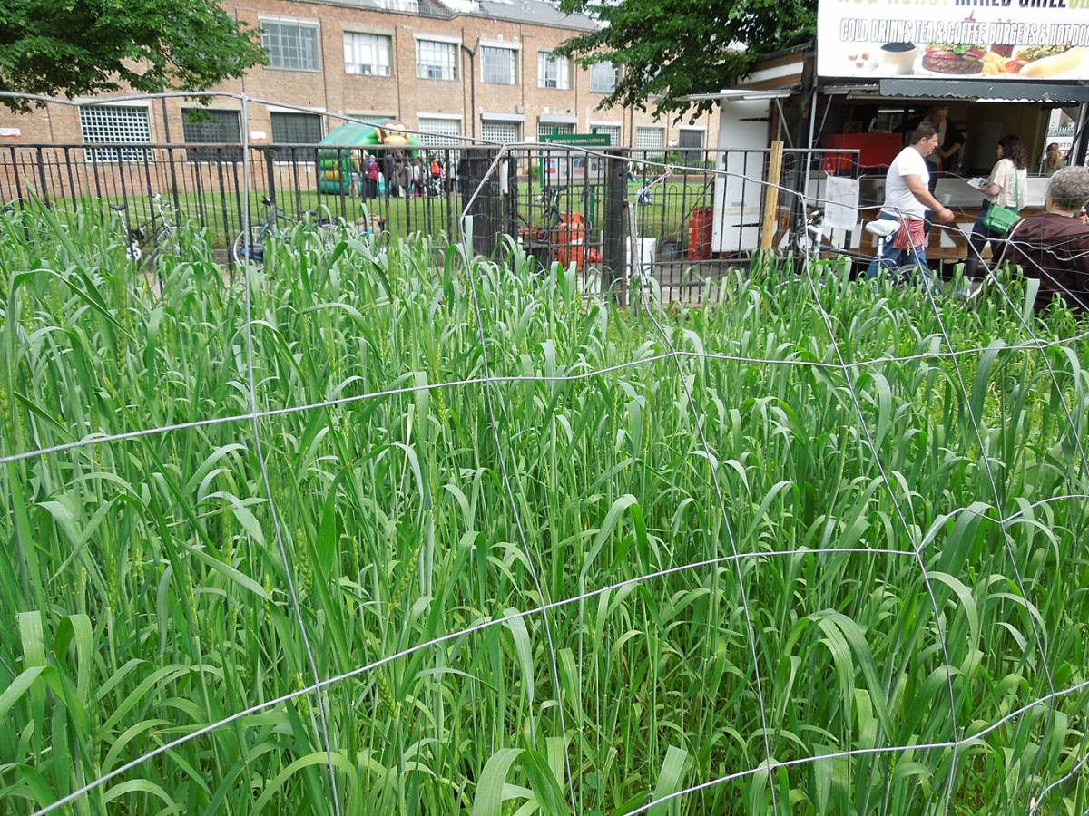 Windmill Gardens Damant heritage spring mix now headed - Brixton Windmill parade and festival 2013 - 3:04pm&nbsp;21<sup>st</sup>&nbsp;Jun.&nbsp;'13