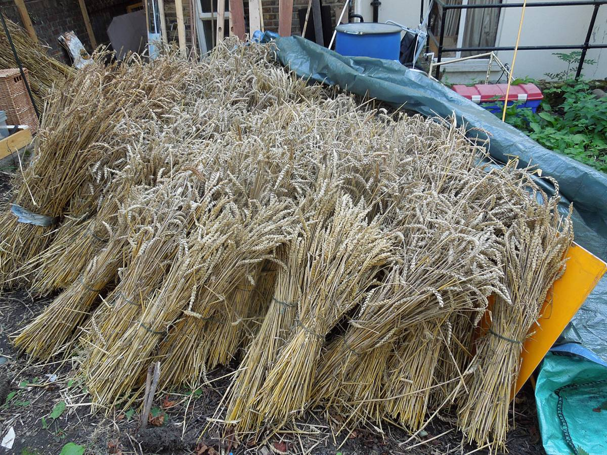 sheaves up in London ready for Southbanquet - 1:43pm&nbsp;27<sup>th</sup>&nbsp;Aug.&nbsp;'13