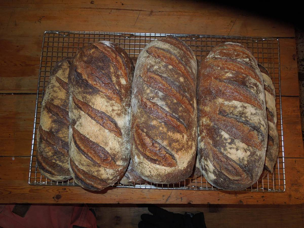 nice set of Ashby loaves for Toast E.D. from the Old Post Office Bakery - 9:14am&nbsp;15<sup>th</sup>&nbsp;Nov.&nbsp;'13