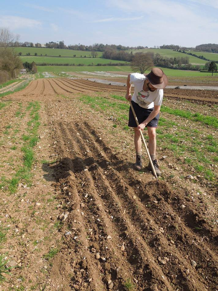 winter wheat progress and Spring sowing on Perry Court, helped by Kees Frederiks - 10:07am&nbsp;24<sup>th</sup>&nbsp;Apr.&nbsp;'13