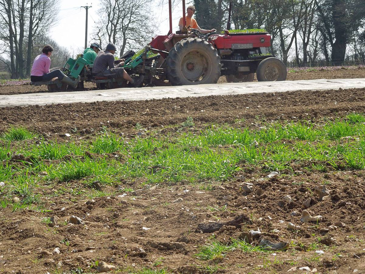 winter wheat progress and Spring sowing on Perry Court, Paul and co going past on Russell planter - 11:16am&nbsp;24<sup>th</sup>&nbsp;Apr.&nbsp;'13