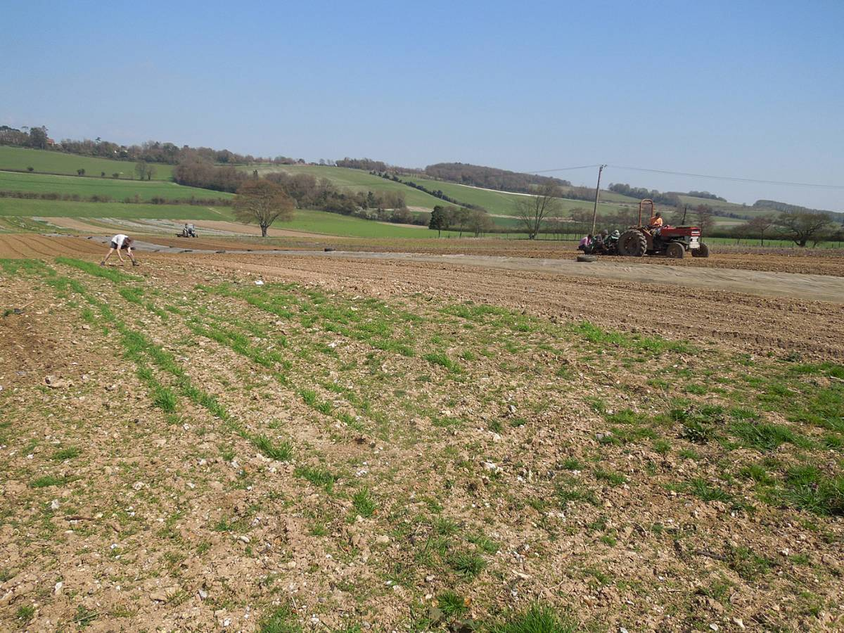 winter wheat progress and Spring sowing on Perry Court - 12:12pm&nbsp;24<sup>th</sup>&nbsp;Apr.&nbsp;'13