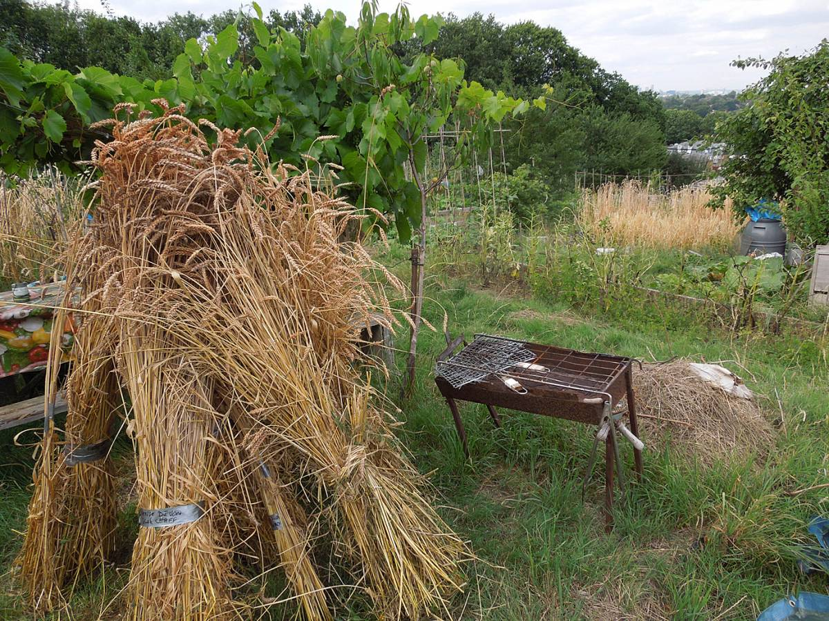 plot harvest and review - 4:35pm&nbsp;9<sup>th</sup>&nbsp;Aug.&nbsp;'13
