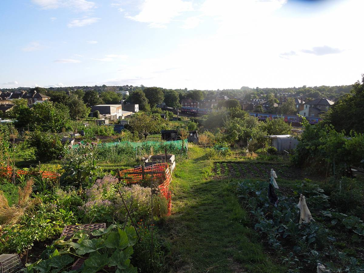 Birkbeck Hill allotments - 5:49pm&nbsp;14<sup>th</sup>&nbsp;Aug.&nbsp;'13