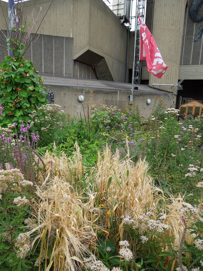 Queen Elizabeth Hall roof garden review - 10:42am&nbsp;16<sup>th</sup>&nbsp;Aug.&nbsp;'13