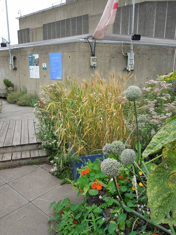 Queen Elizabeth Hall roof garden review - 10:44am&nbsp;16<sup>th</sup>&nbsp;Aug.&nbsp;'13