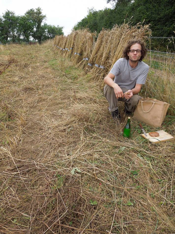 harvest in, Perry Court harvest 2013 - 3:43pm&nbsp;24<sup>th</sup>&nbsp;Aug.&nbsp;'13