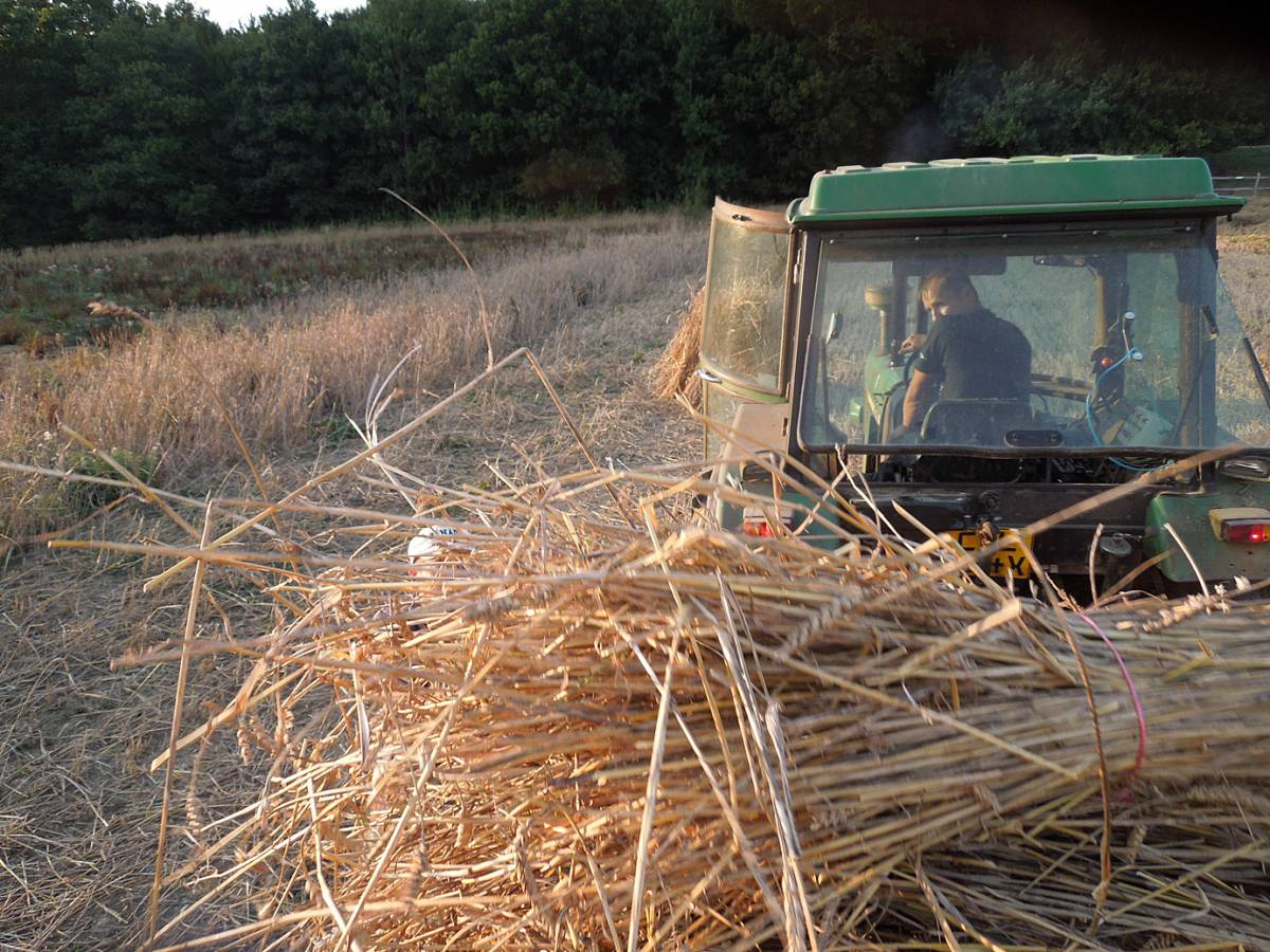 Rytis drives tractor and trailer, WoWo final harvest 2013 - 5:43pm&nbsp;4<sup>th</sup>&nbsp;Sep.&nbsp;'13