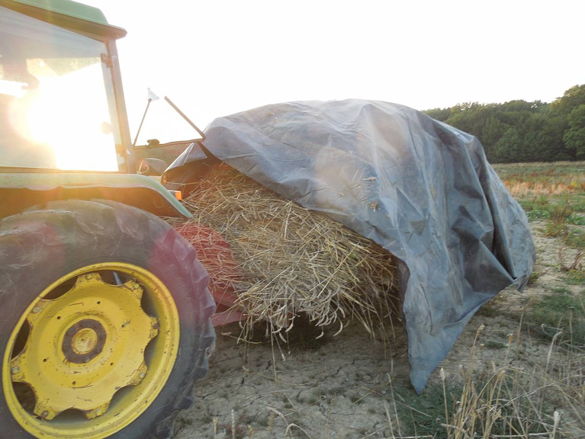 sheaves going under cover, WoWo final harvest 2013 - 6:01pm&nbsp;4<sup>th</sup>&nbsp;Sep.&nbsp;'13