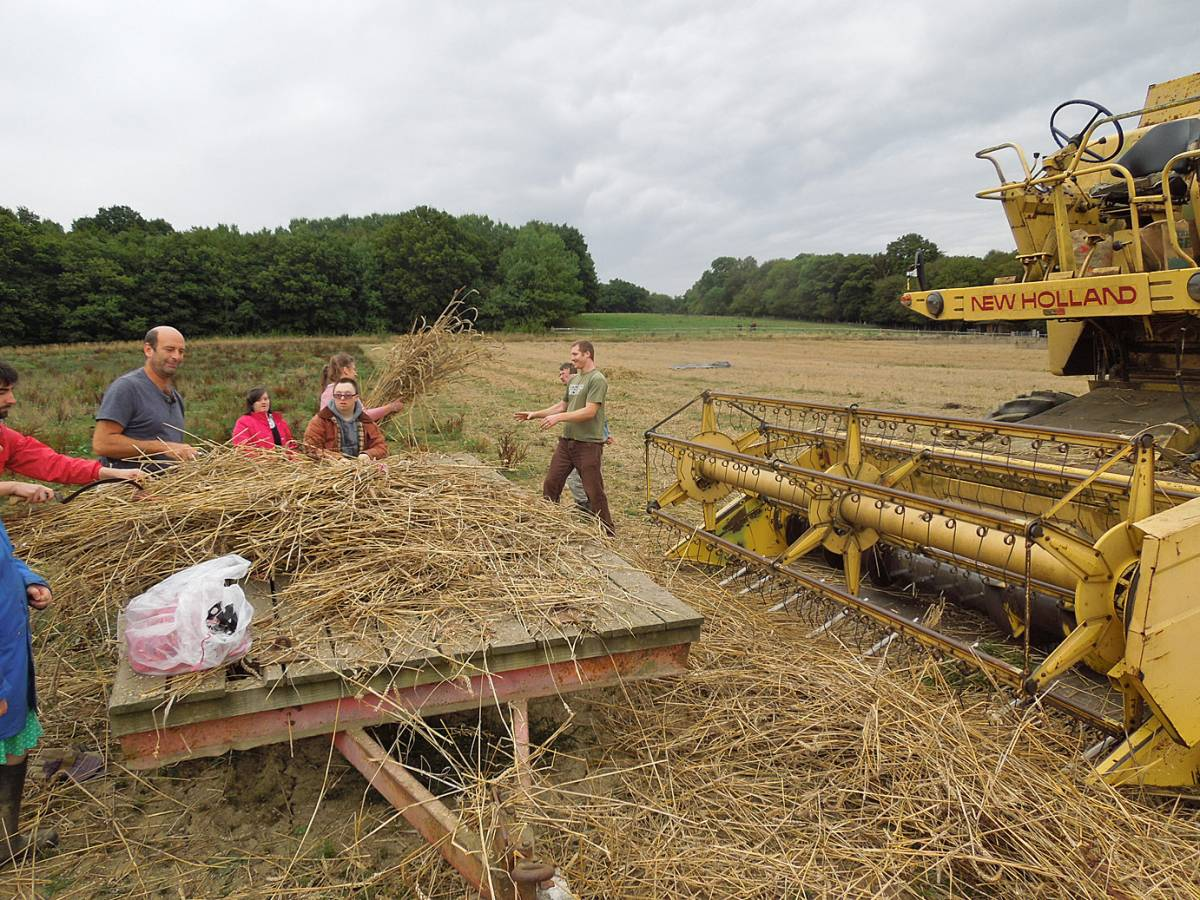 Rytis and Charlie load sheaves into static combine, final harvest, WoWo - 2:43pm&nbsp;11<sup>th</sup>&nbsp;Sep.&nbsp;'13