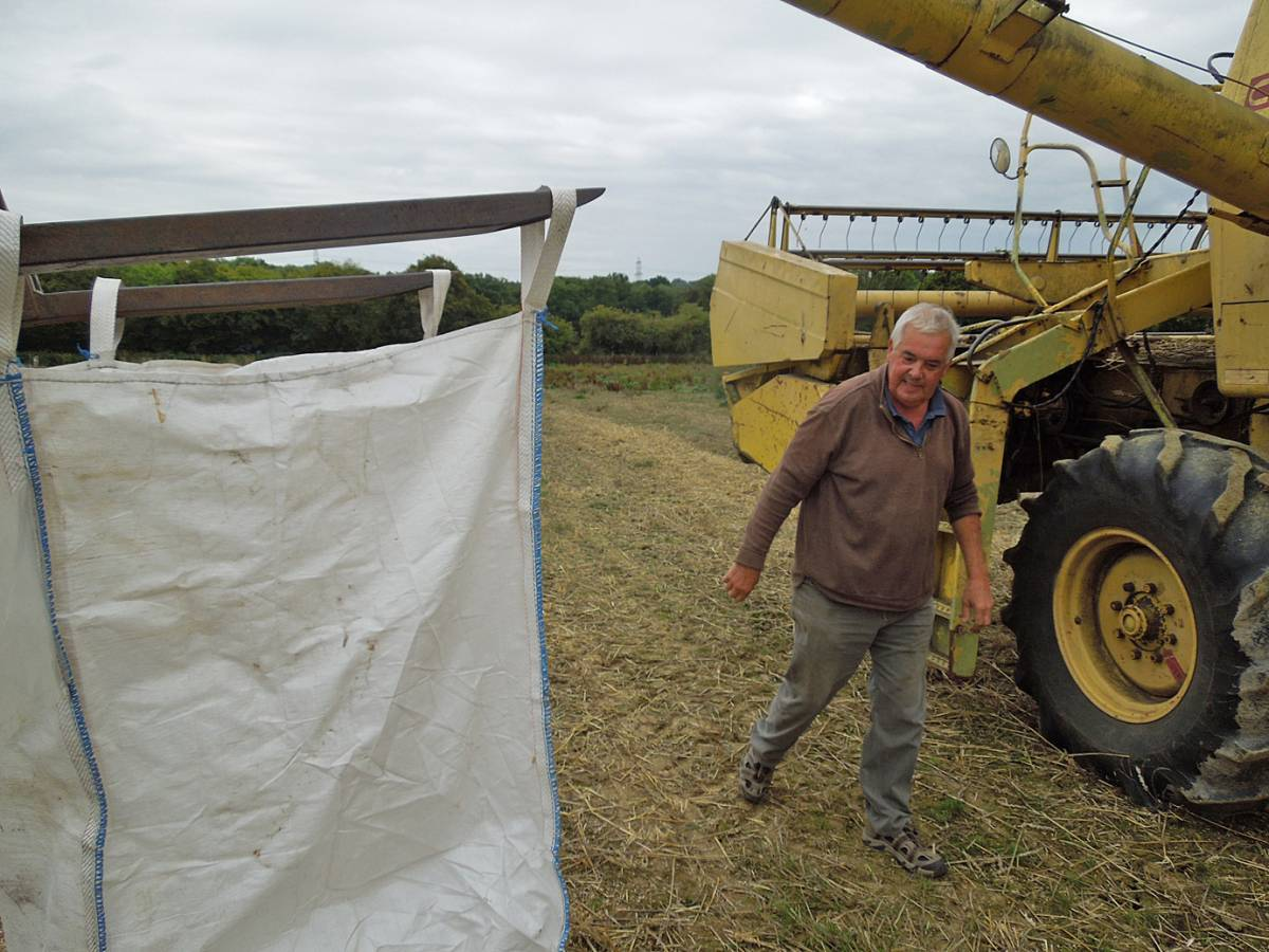Tim about to empty out our heritage wheat, final harvest, WoWo - 2:55pm&nbsp;11<sup>th</sup>&nbsp;Sep.&nbsp;'13