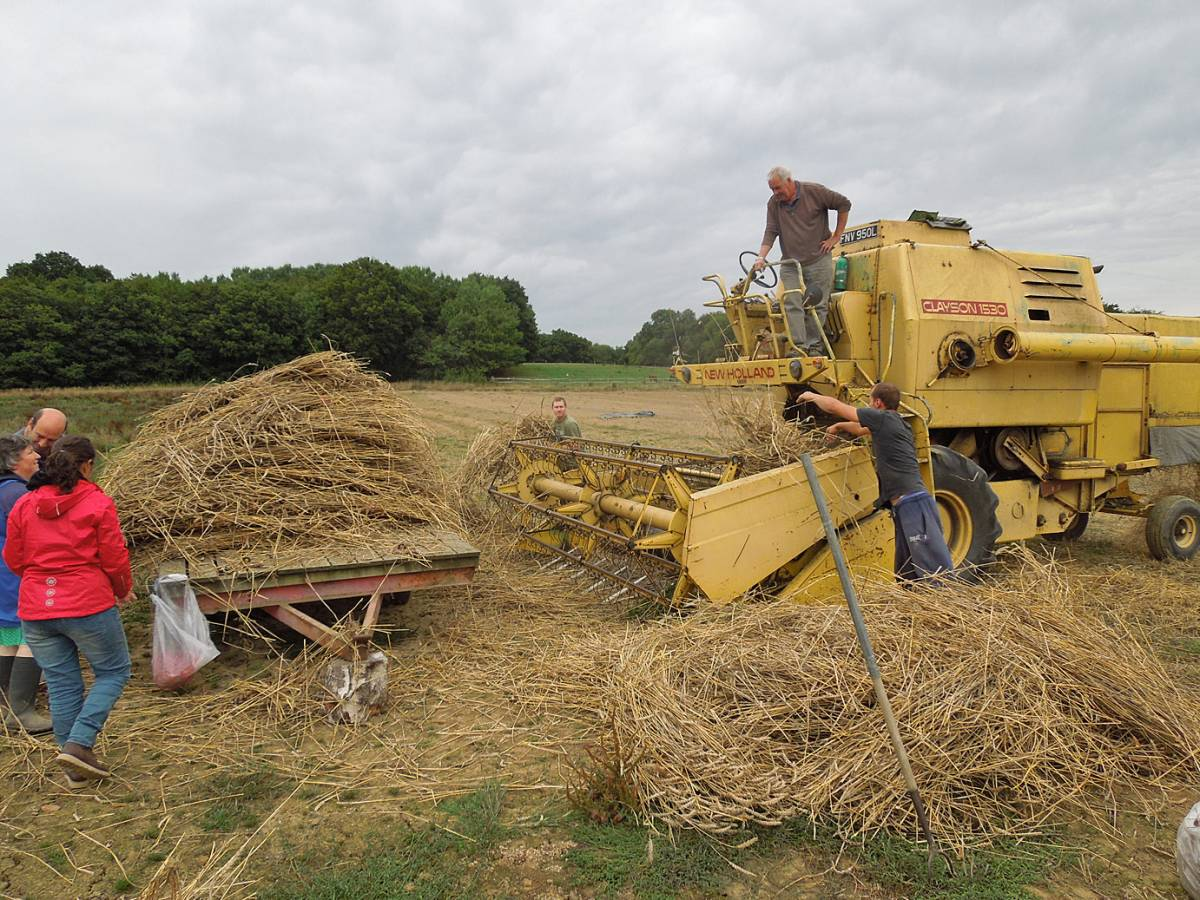 Rytis and Charlie load sheaves into static combine, final harvest, WoWo - 2:38pm&nbsp;11<sup>th</sup>&nbsp;Sep.&nbsp;'13