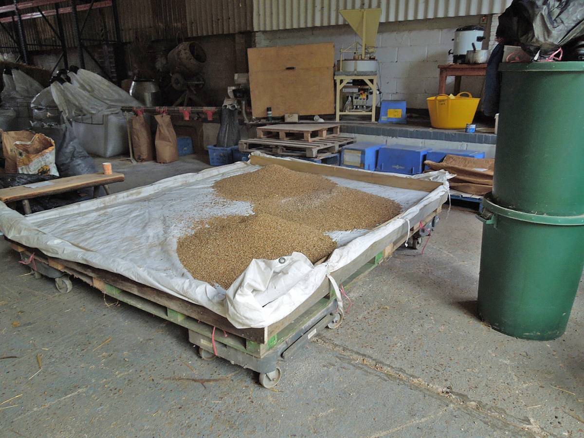 heritage mix on drying tray, final harvest, WoWo - 1:58pm&nbsp;12<sup>th</sup>&nbsp;Sep.&nbsp;'13