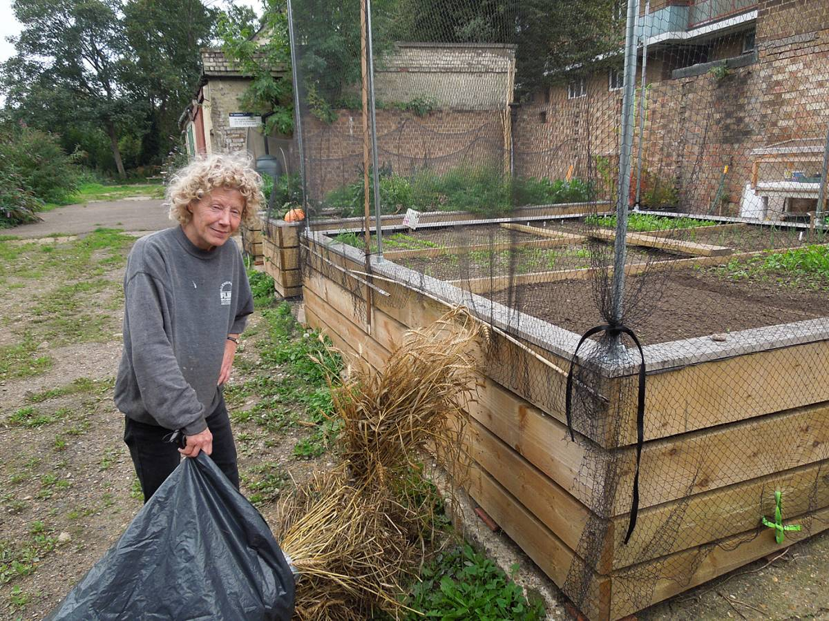 Jane from Blenheim Mews Community Garden, Brockley loading up Spring heritage wheat sheaves - 11:57am&nbsp;27<sup>th</sup>&nbsp;Sep.&nbsp;'13
