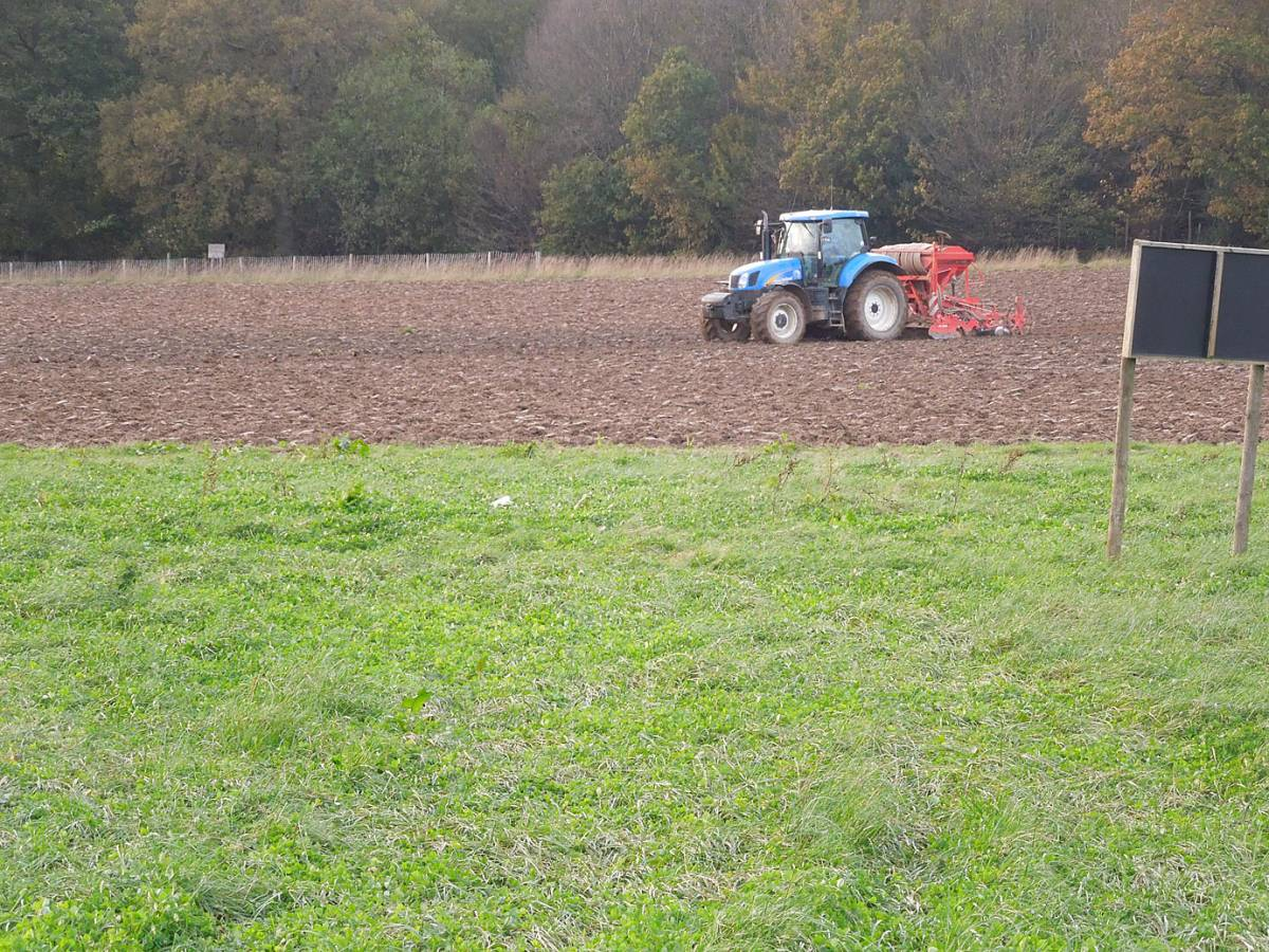 Lambeth Latino heritage winter wheat mix goes in, with the big boys kit - winter heritage wheat sowing 2012 - 4:59pm&nbsp;31<sup>st</sup>&nbsp;Oct.&nbsp;'12