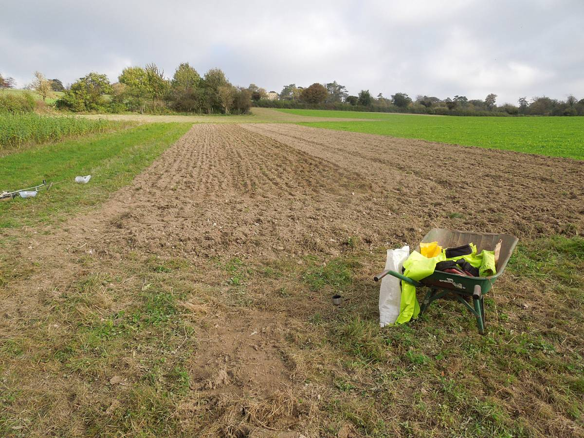 Perry Court biodynamic farm sowing of Red Lammas, Old Kent Red, Kentisch Red Straw and Kent Old Hoary - 11:54am&nbsp;28<sup>th</sup>&nbsp;Oct.&nbsp;'14