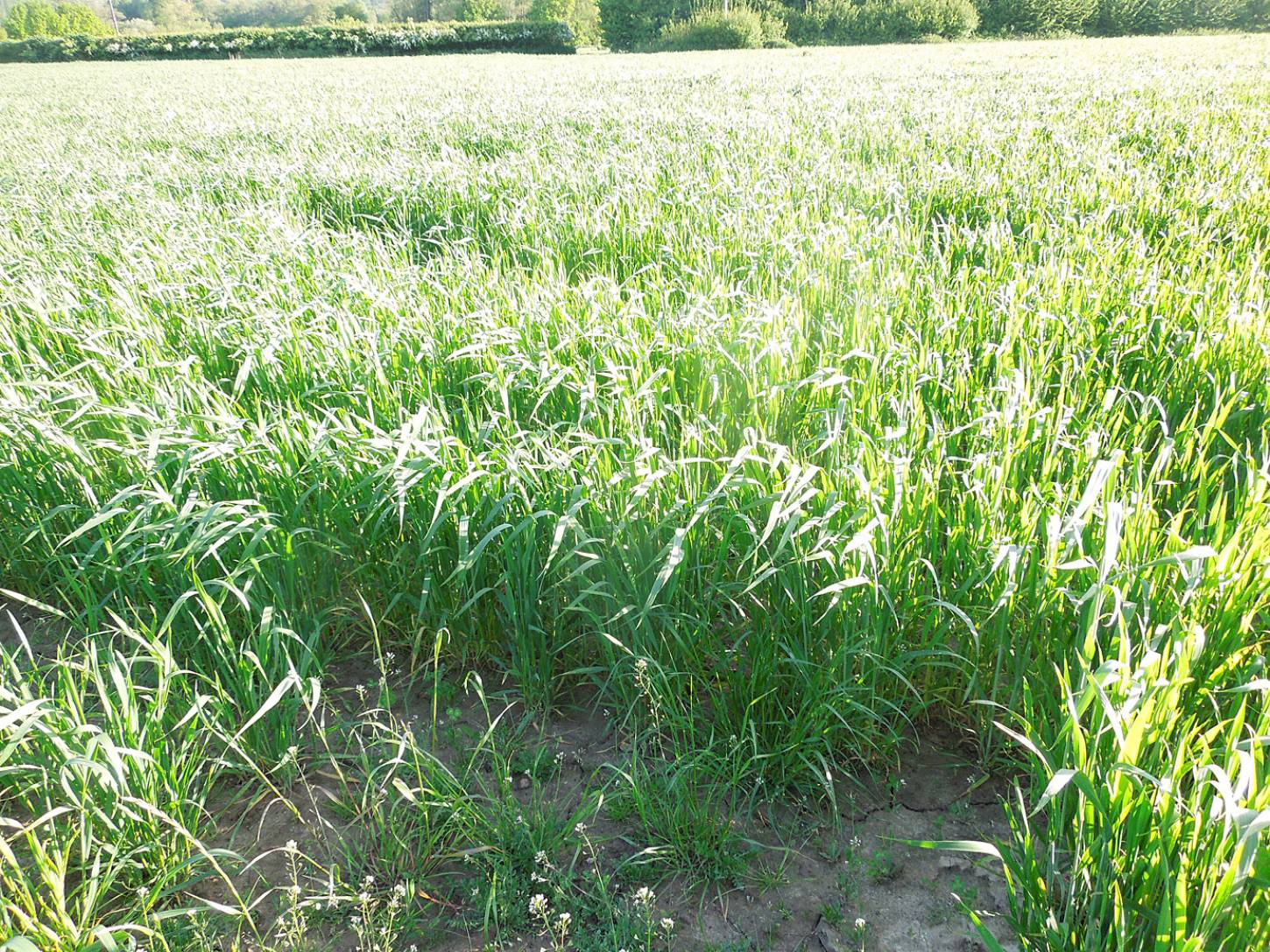 WoWo crop review - 6:54pm&nbsp;21<sup>st</sup>&nbsp;May.&nbsp;'15