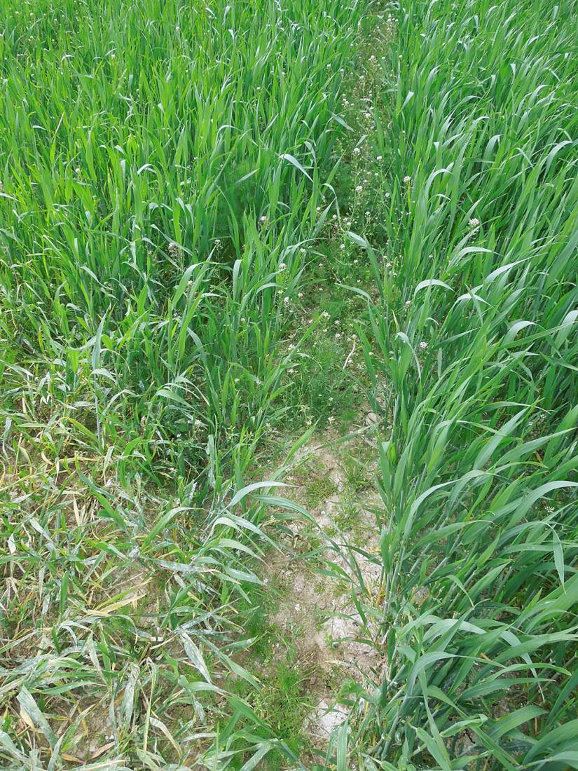 WoWo crop review - Nelson - 2:50pm&nbsp;24<sup>th</sup>&nbsp;May.&nbsp;'15