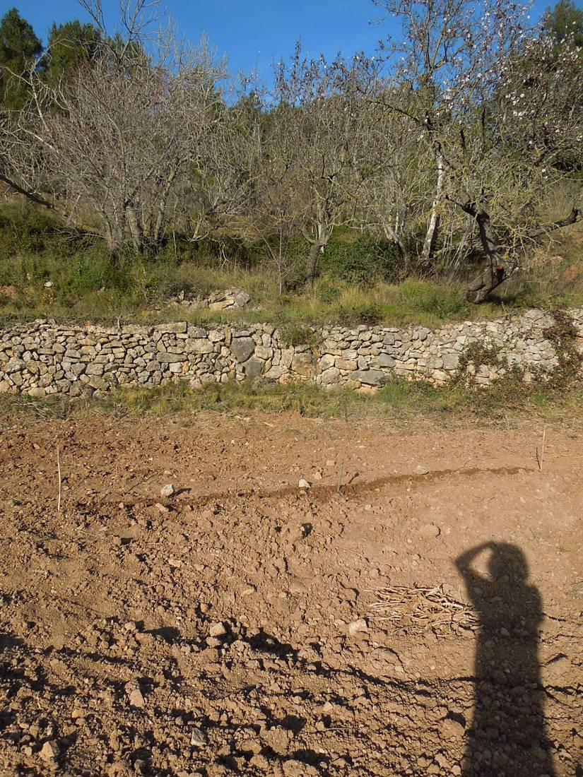 April Bearded sowing, Tivissa, Catalonia - 5:09pm&nbsp;1<sup>st</sup>&nbsp;Mar.&nbsp;'15