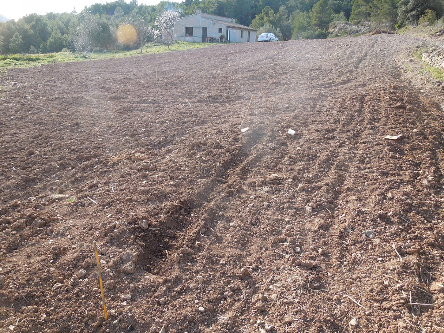 April Bearded sowing, Tivissa, Catalonia - 4:57pm&nbsp;1<sup>st</sup>&nbsp;Mar.&nbsp;'15