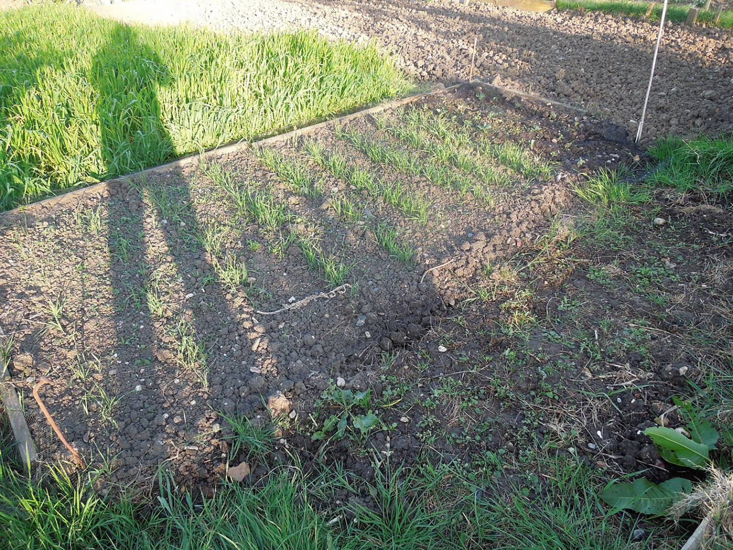 plot review< April Bearded sowing - 6:29pm&nbsp;21<sup>st</sup>&nbsp;Apr.&nbsp;'15