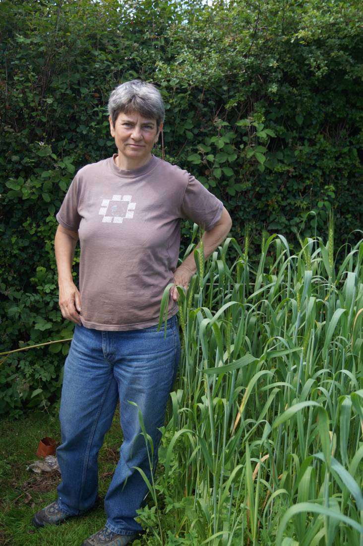 April Bearded heritage spring wheat with Dede Liss in Forest of Dean - 27th June - 2:28am&nbsp;14<sup>th</sup>&nbsp;Jan.&nbsp;'13