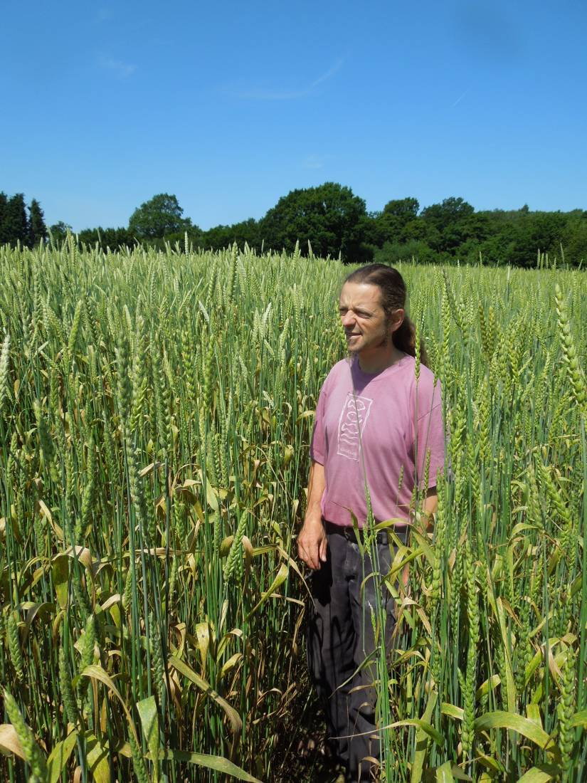 Forest Row baker Jean Marc Albisetti touring WoWo heritage wheat - Red Lammas on right and Ble d'Haie on left - 11:50am&nbsp;3<sup>rd</sup>&nbsp;Jul.&nbsp;'15