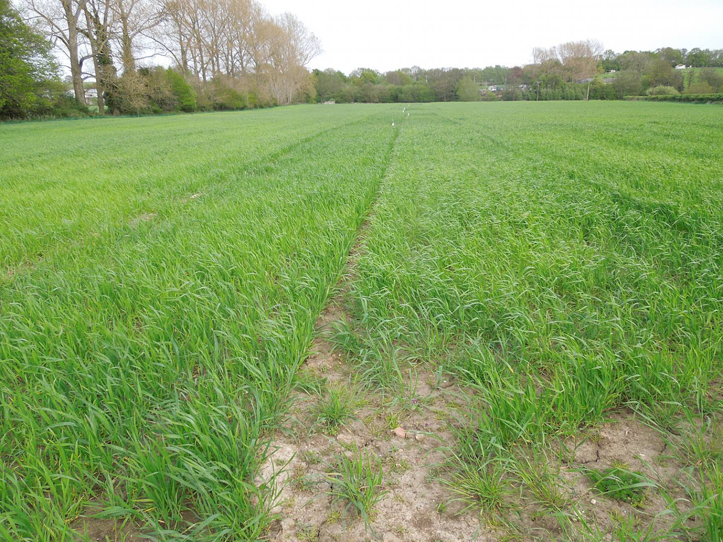 WoWo named heritage line plot in 'Chicken' field - 6:18pm&nbsp;7<sup>th</sup>&nbsp;May.&nbsp;'15