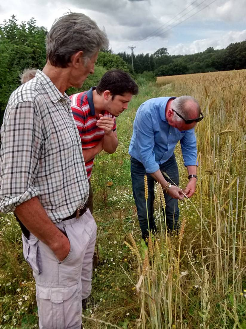 Farmers Michael Duveen, John Pawsey with baker alex Jacobs and our combine man, Tim Tuson inspect the crop - 3:10pm&nbsp;23<sup>rd</sup>&nbsp;Jul.&nbsp;'15