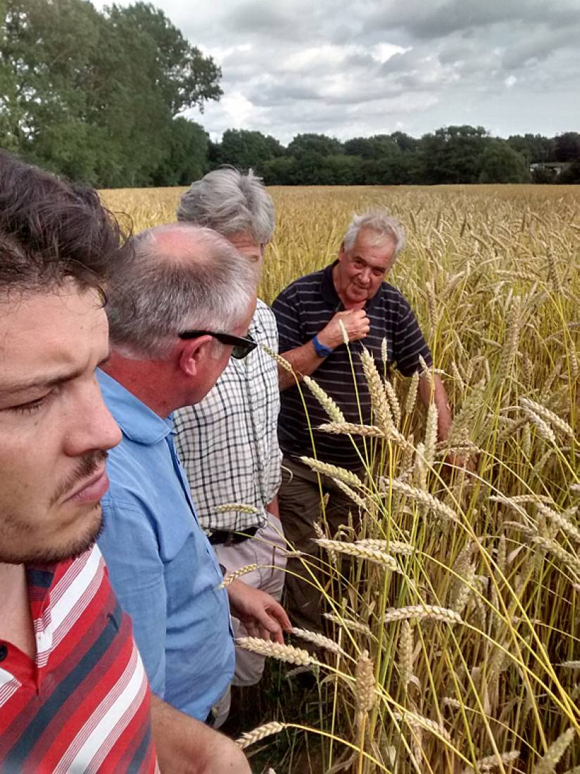 Farmers Michael Duveen, John Pawsey with baker alex Jacobs and our combine man, Tim Tuson inspect the crop - 3:40pm&nbsp;23<sup>rd</sup>&nbsp;Jul.&nbsp;'15  <a href='http://maps.google.com/?t=h&q=50.993786,-0.004914&z=15' target=_blank><img src='http://www.brockwell-bake.org.uk/img/marker.png' style='border:none;vertical-align:top' height=16px></a>