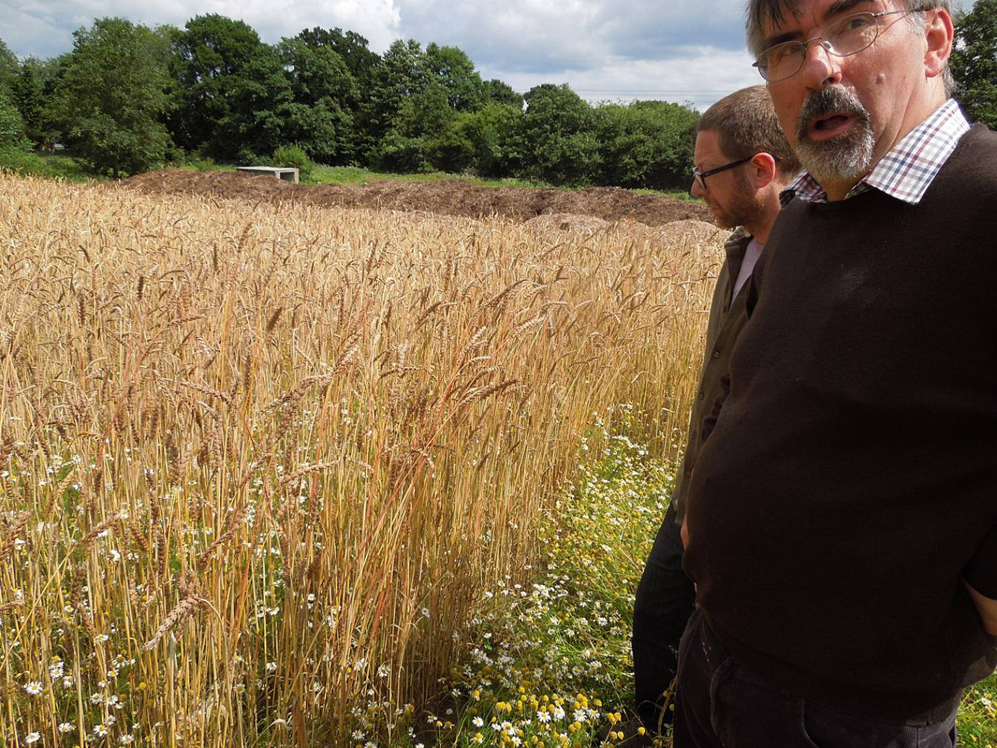 Steven Jacobs of <a href='http://www.organicfarmers.org.uk/' target=_blank>Organic Farmers and Growers</a> and Howard Roberts of <A href='http://www.hammondsend.co.uk/' target=_blank>Hammonds End</a> organic Farm view our WoWo wheat - 2:33pm&nbsp;30<sup>th</sup>&nbsp;Jul.&nbsp;'15