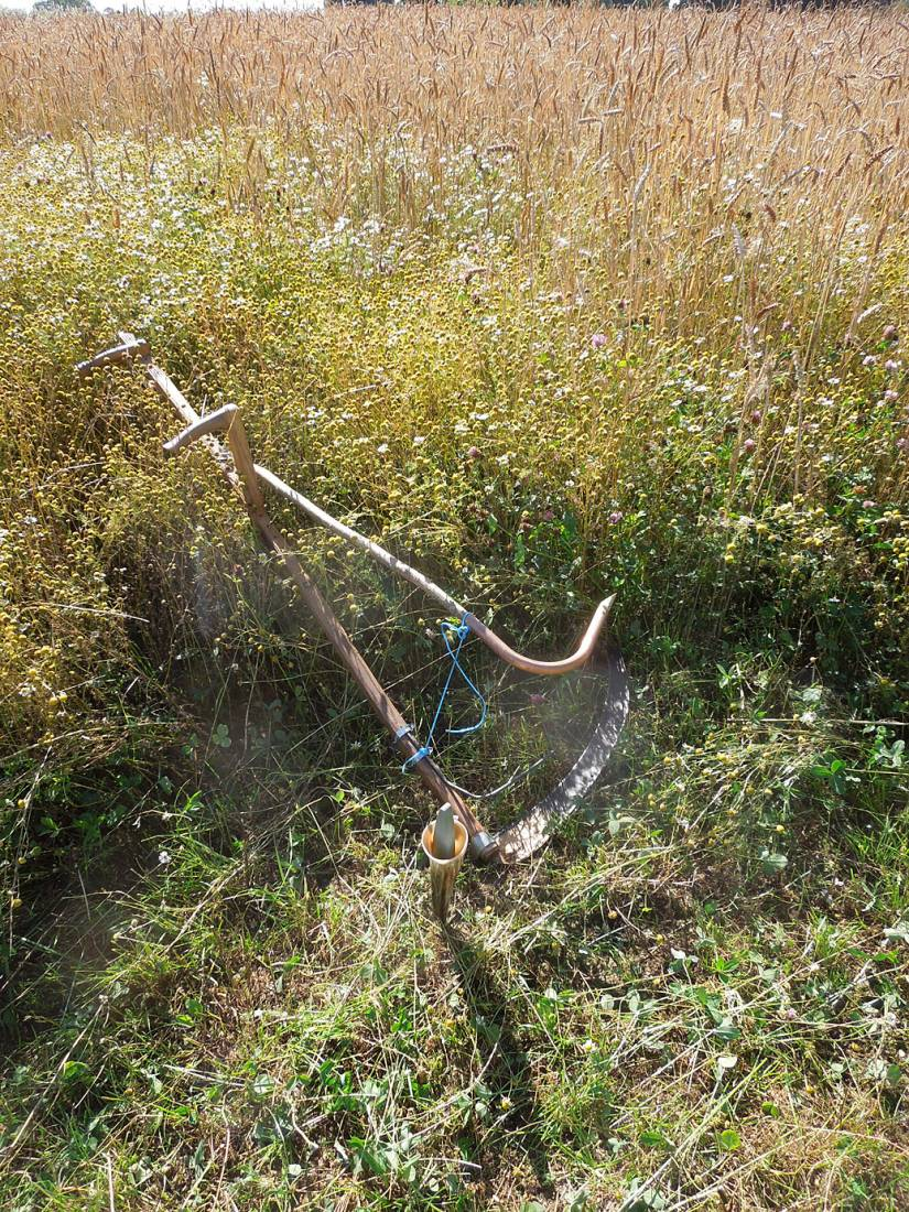 WoWo harvest prep - new cradle from <a href='https://www.youtube.com/watch?v=cF0kdhIcG7U' target=_blank>Stephen Simpson</a> - 4:05pm&nbsp;1<sup>st</sup>&nbsp;Aug.&nbsp;'15