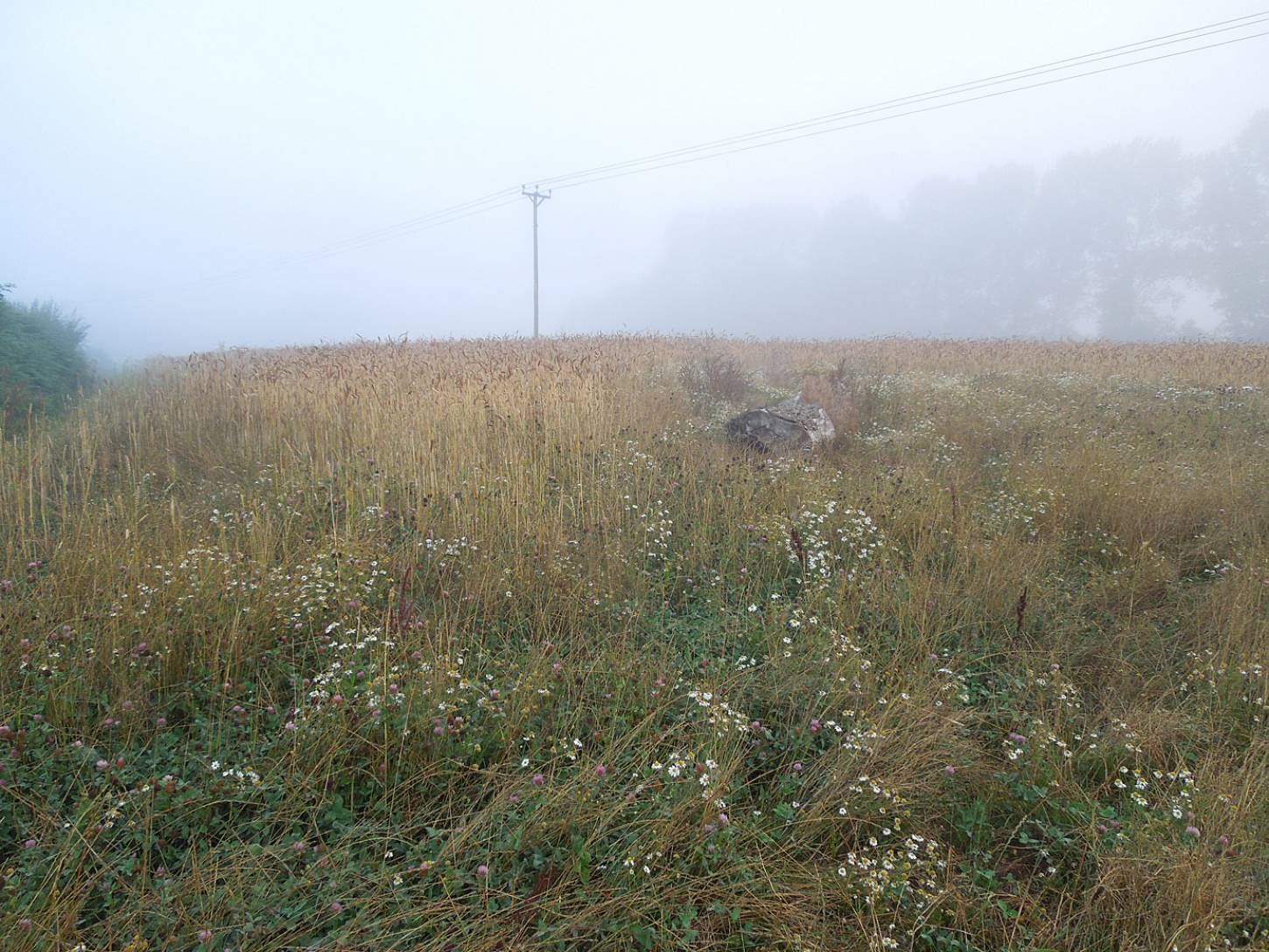 WoWo harvest prep - another misty dawn - 6:32am&nbsp;2<sup>nd</sup>&nbsp;Aug.&nbsp;'15