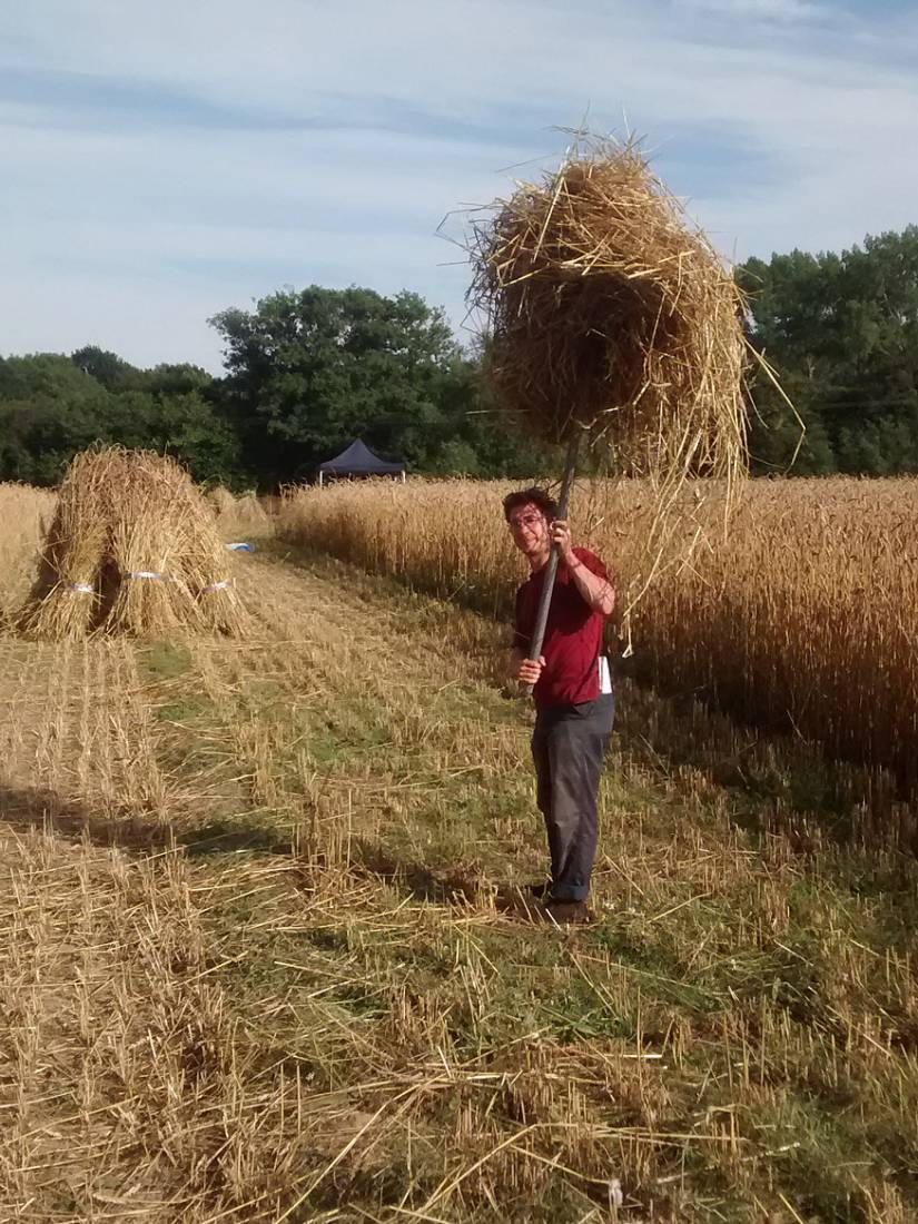 WoWo manual harvest - end day 2, Friday with Olivier - 5:27pm&nbsp;7<sup>th</sup>&nbsp;Aug.&nbsp;'15  <a href='http://maps.google.com/?t=h&q=50.993507,-0.003883&z=15' target=_blank><img src='http://www.brockwell-bake.org.uk/img/marker.png' style='border:none;vertical-align:top' height=16px></a>