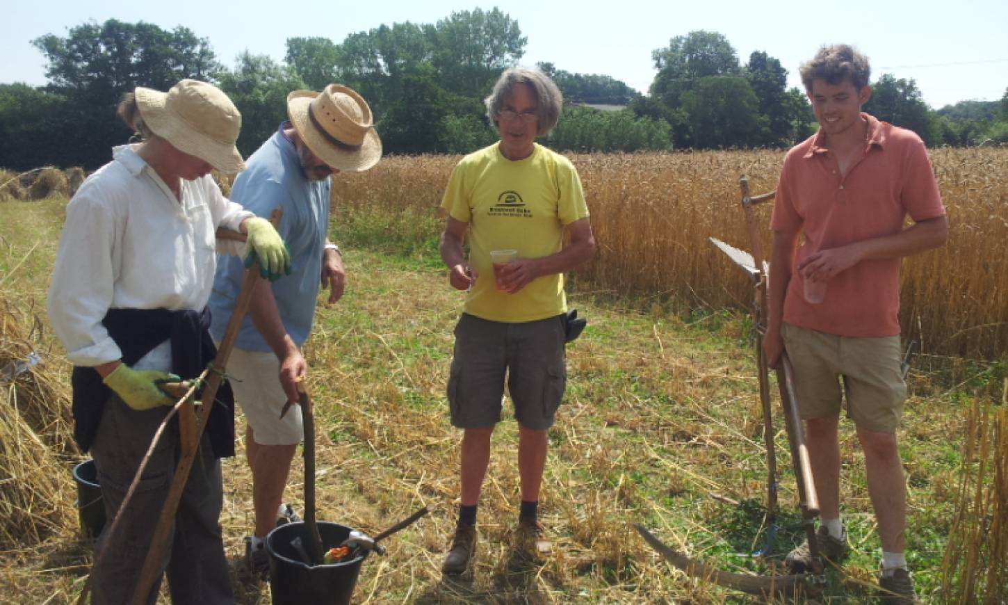 WoWo manual harvest pic: Ann Bodkin, scythers conference with Petra, Robert, Andy and Mathew - 12:26pm&nbsp;8<sup>th</sup>&nbsp;Aug.&nbsp;'15