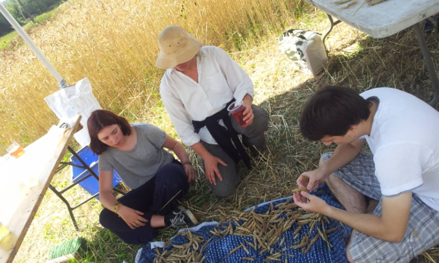 WoWo manual harvest pic: Ann Bodkin - 12:30pm&nbsp;8<sup>th</sup>&nbsp;Aug.&nbsp;'15